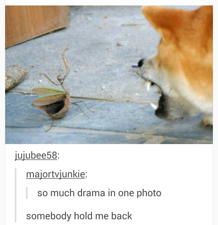 doge Memes praying mantis angry - 8984188928