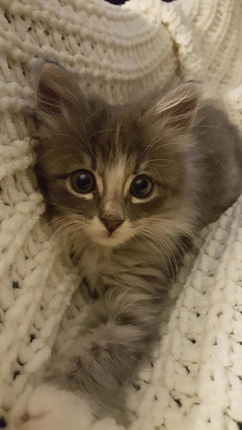 kitten - 8984189952