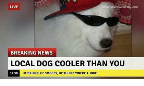 wholesome,list,Memes,Breaking News