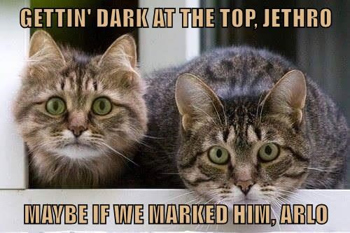 GETTIN' DARK AT THE TOP, JETHRO  MAYBE IF WE MARKED HIM, ARLO