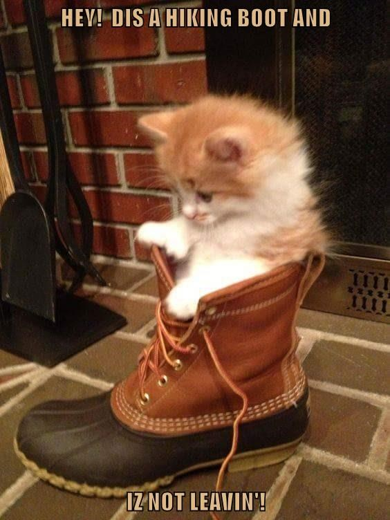 HEY!  DIS A HIKING BOOT AND  IZ NOT LEAVIN'!