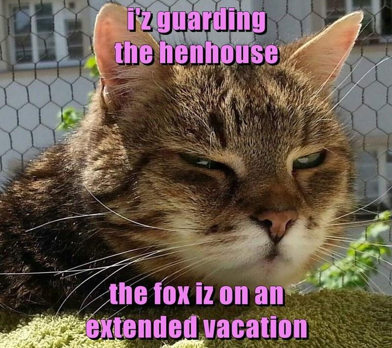 i'z guarding                                         the henhouse  the fox iz on an                     extended vacation
