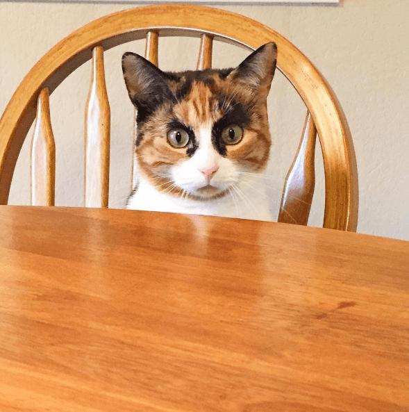 judgemental - Cat