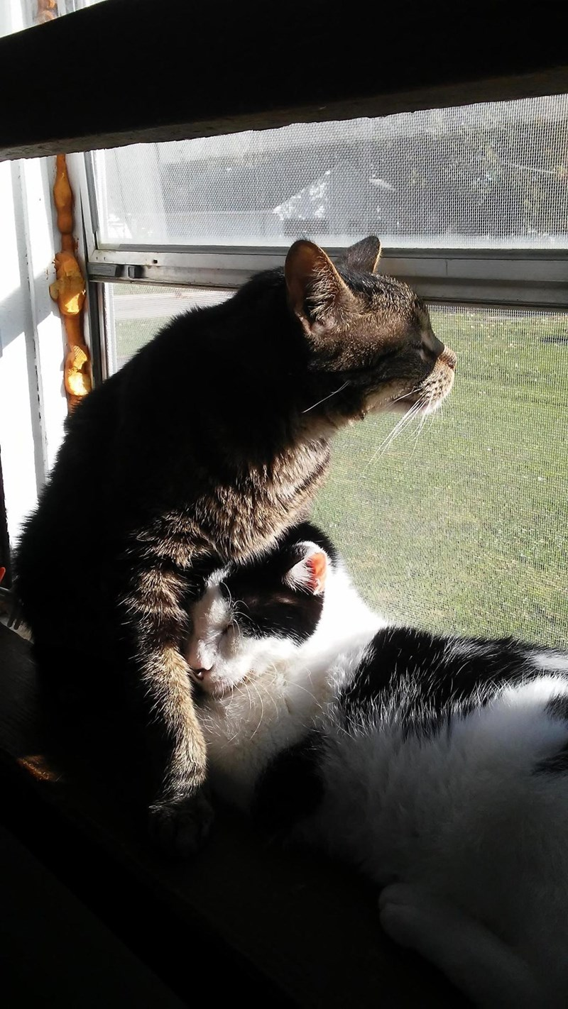 snuggle Cats - 8984378112