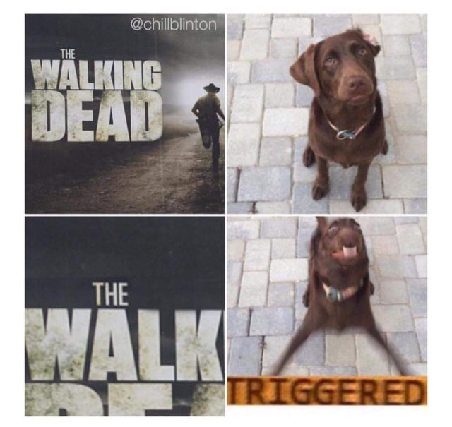 the walking dead dog walk meme