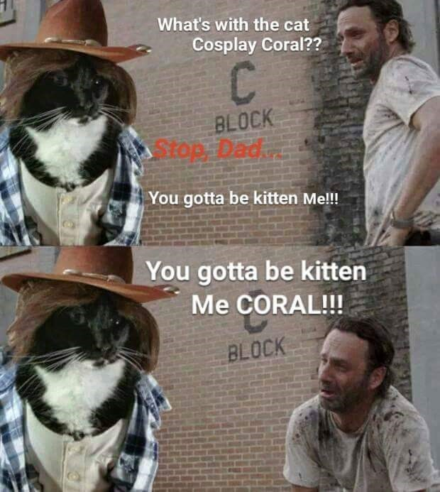 carl cat cosplay meme
