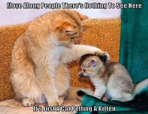 Move Along People There's Nothing To See Here  It's Just A Cat Petting A Kitten
