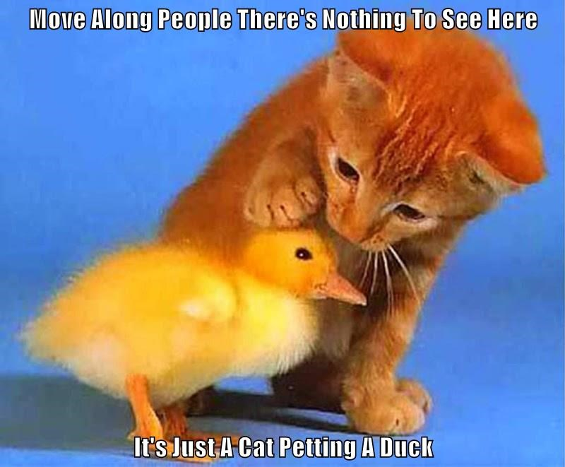 Move Along People There's Nothing To See Here  It's Just A Cat Petting A Duck
