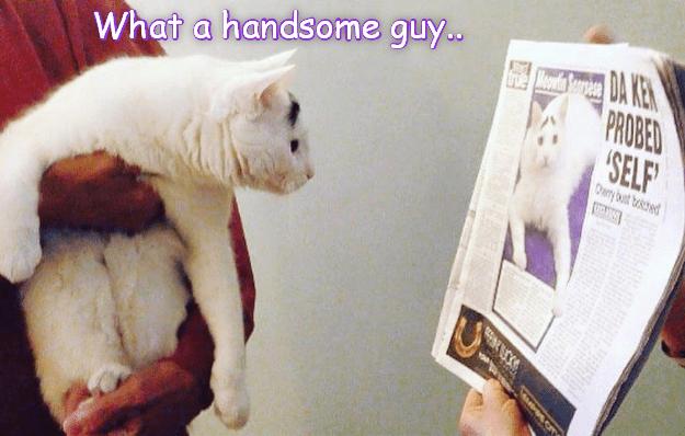 Kitty iz bery smart!