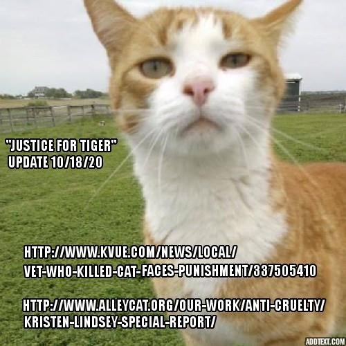Justice for Tiger