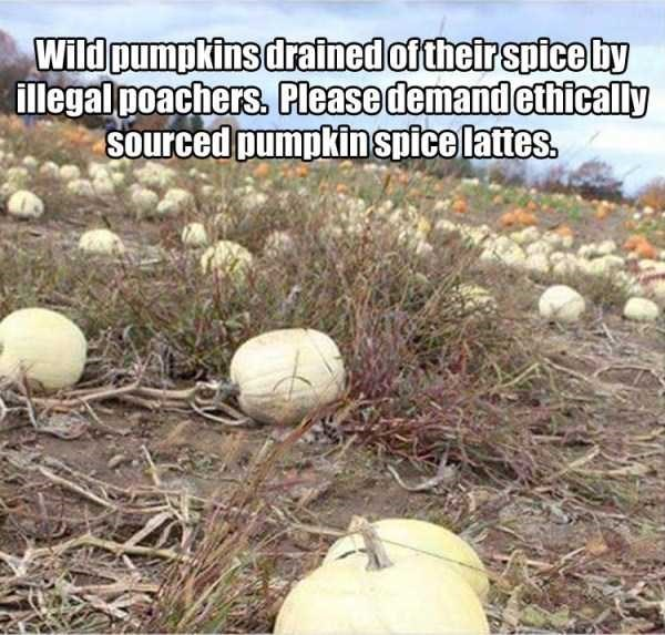 Won't somebody PLEASE think of the pumpkins?