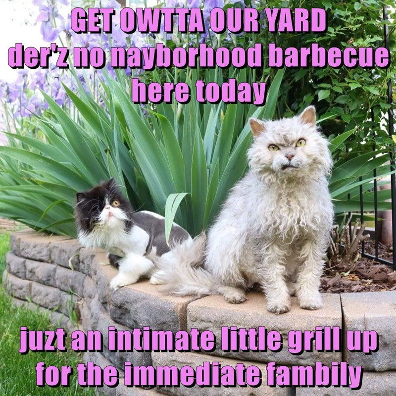 GET OWTTA OUR YARD                                                                der'z no nayborhood barbecue here today  juzt an intimate little grill up for the immediate fambily