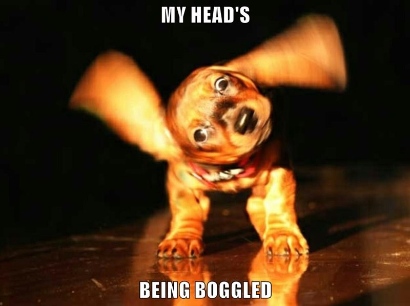 MY HEAD'S  BEING BOGGLED