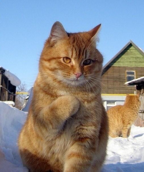 Cats - 8984842496