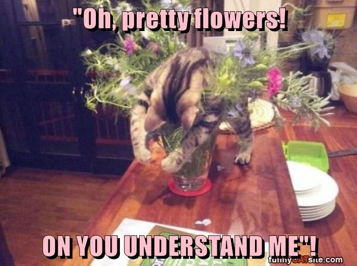 """Oh, pretty flowers!  ON YOU UNDERSTAND ME""!"