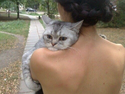 Funny image of a cat that is being held by a woman and the cat is clearly in love.