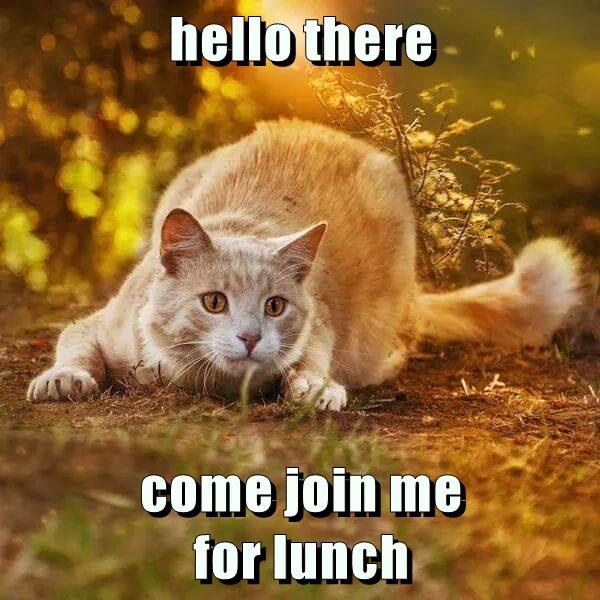 hello there  come join me                     for lunch
