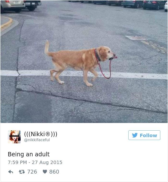 Dog - ((Nikki®)) @nikkifaceful Follow Being an adult 7:59 PM 27 Aug 2015 t726 860