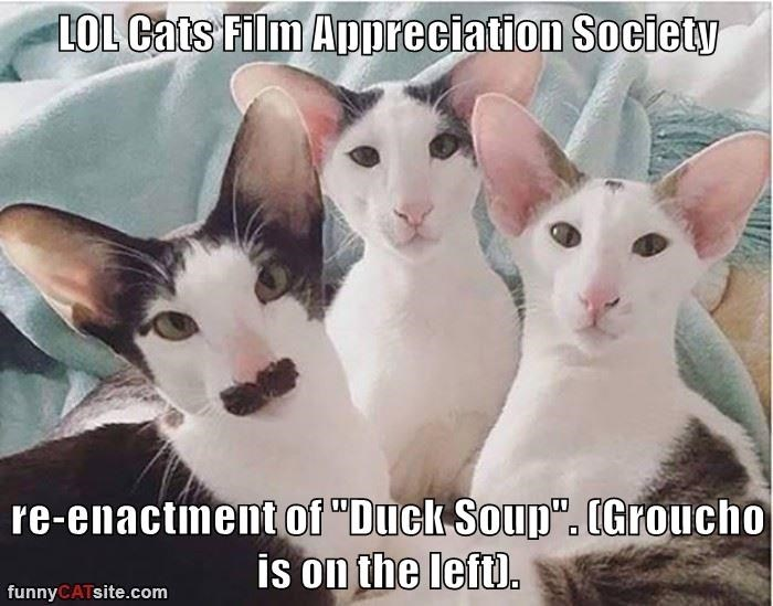 "LOL Cats Film Appreciation Society  re-enactment of ""Duck Soup"". (Groucho is on the left)."