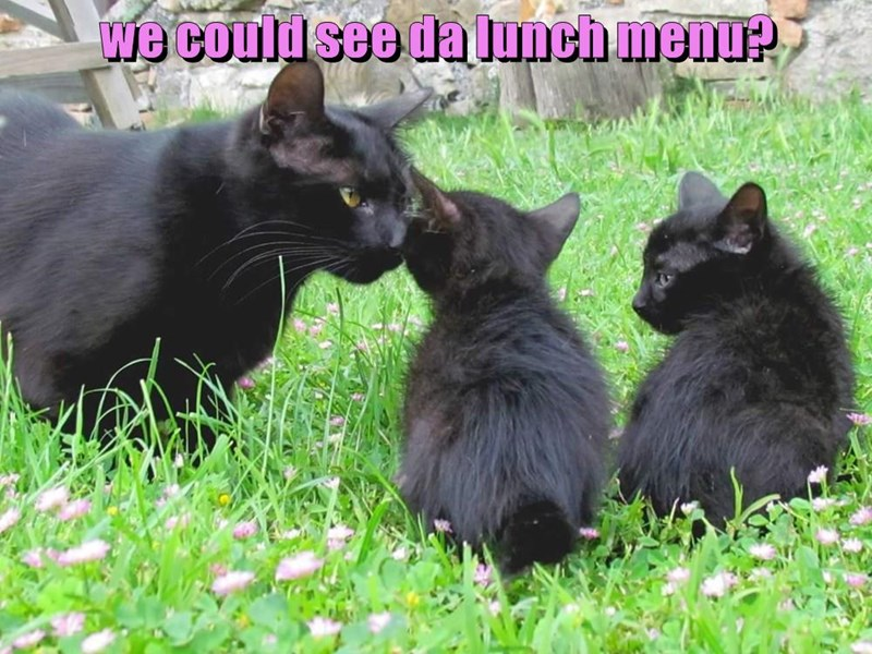 we could see da lunch menu?