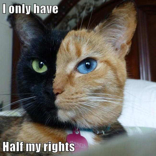 puns Cats image - 8985121536