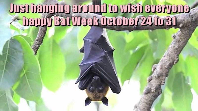 bats bat week caption - 8985135360