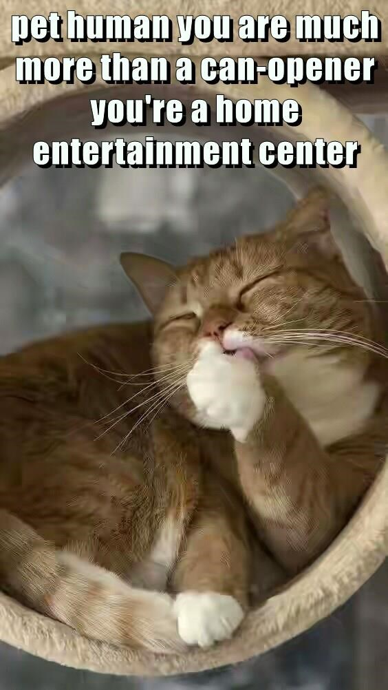 can opener cat caption entertainment home center more - 8985140992