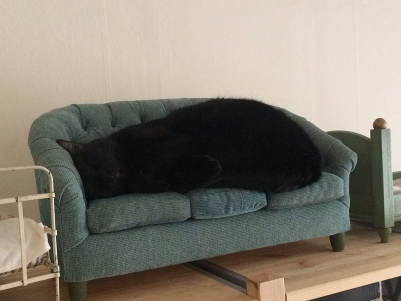 Picture of a cat sleeping on a tiny couch that makes the cat look huge.