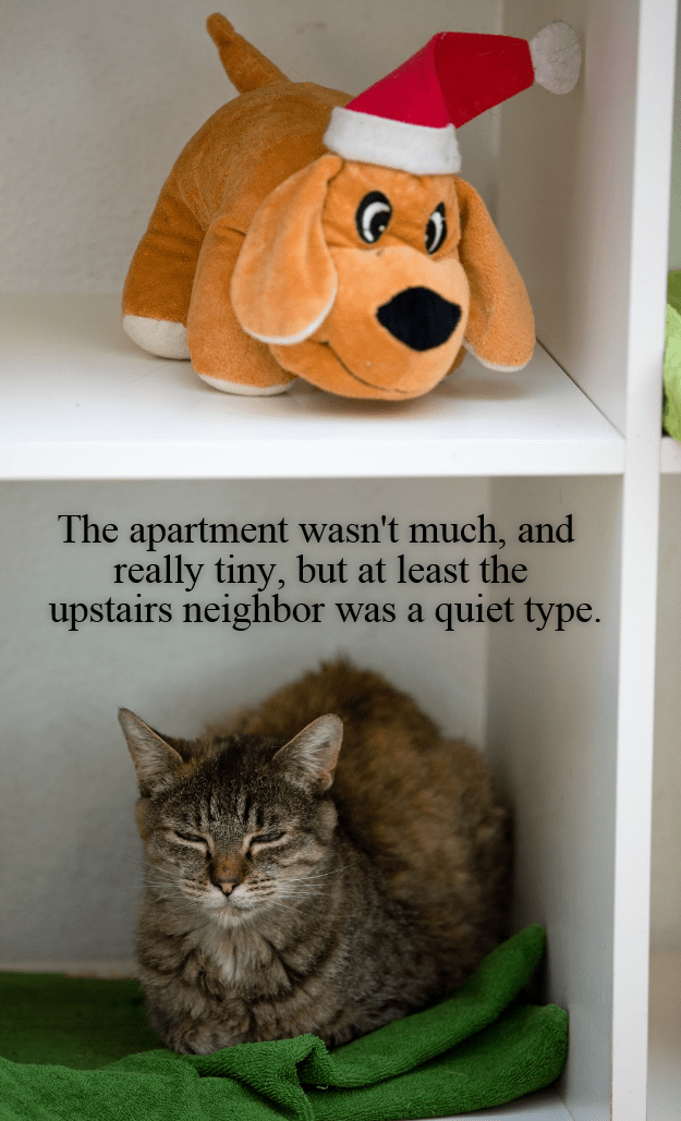cat,upstairs,tiny,quiet,type,caption,neighbor,apartment