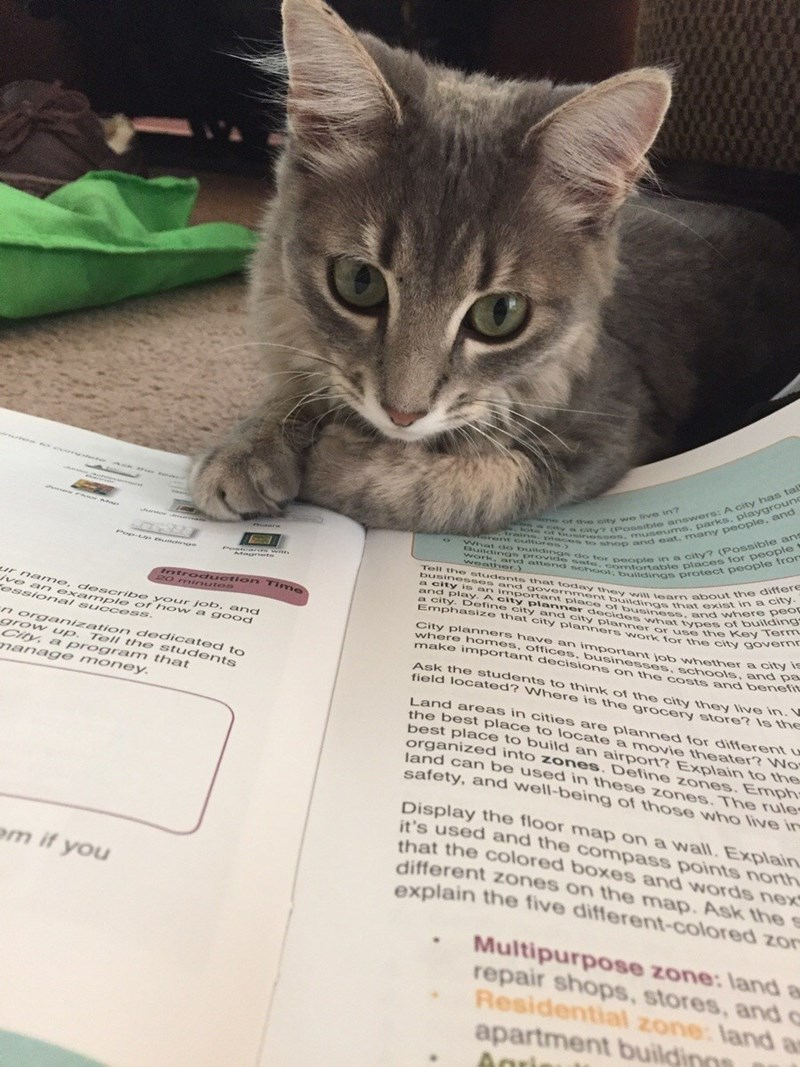 studying Cats - 8985194496