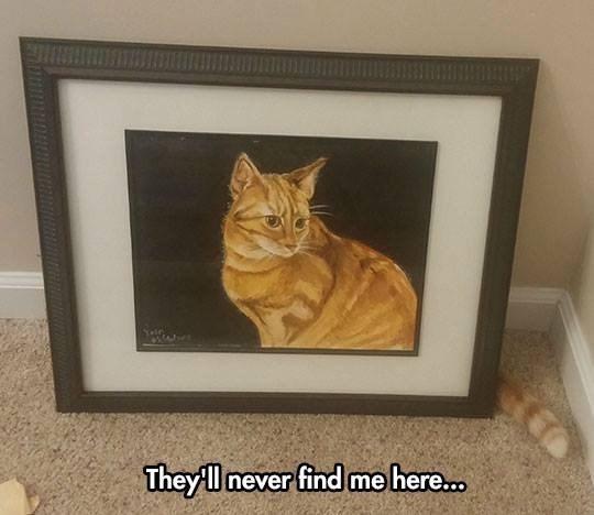 Cats hiding - 8985195264