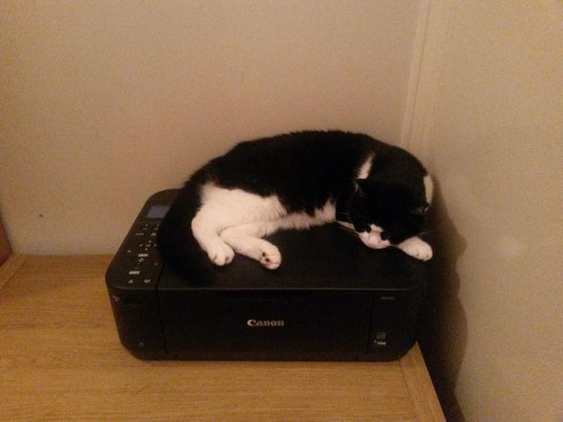 canon Cats - 8985195520