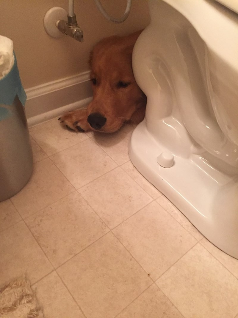 dogs hiding - 8985196032