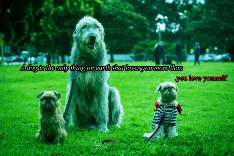 dogs love - 8985196288