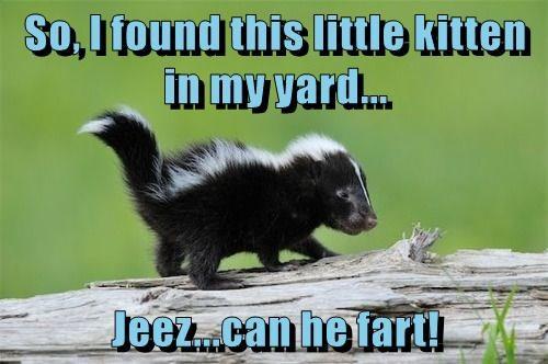 skunk caption funny fart - 8985203456