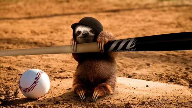 sloth - Ball - Zaru CCi
