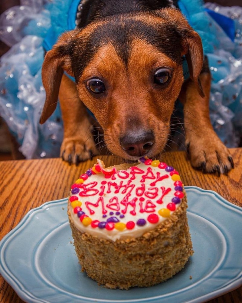 cake dogs birthday - 8985254912