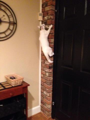 climbing Cats - 8985255168