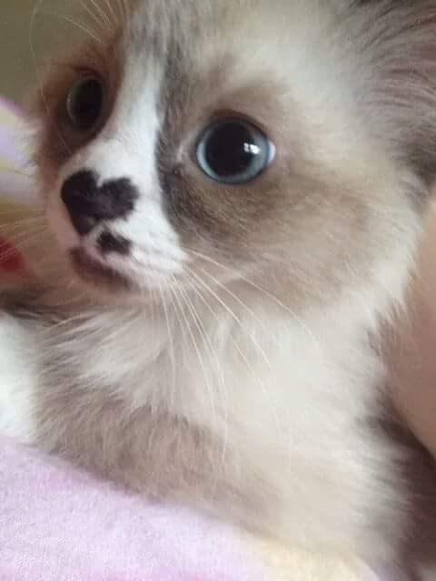 heart Cats - 8985256192
