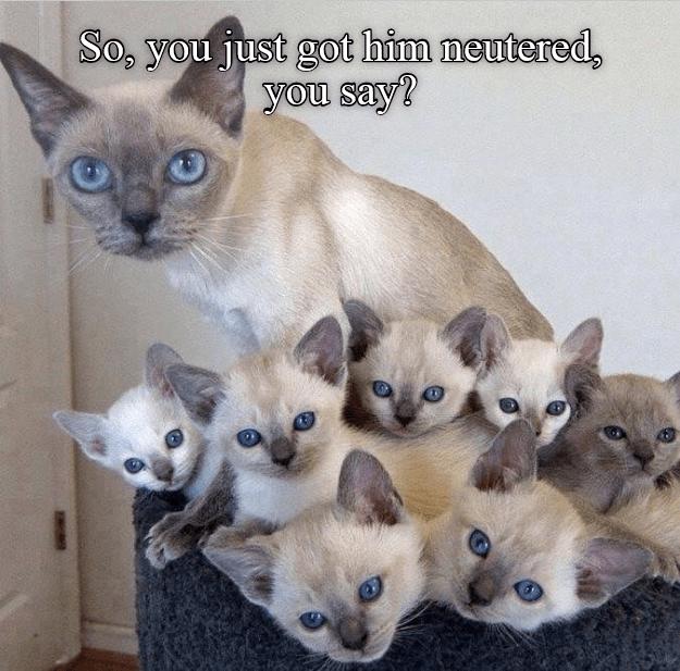 say neutered just caption Cats - 8985273600