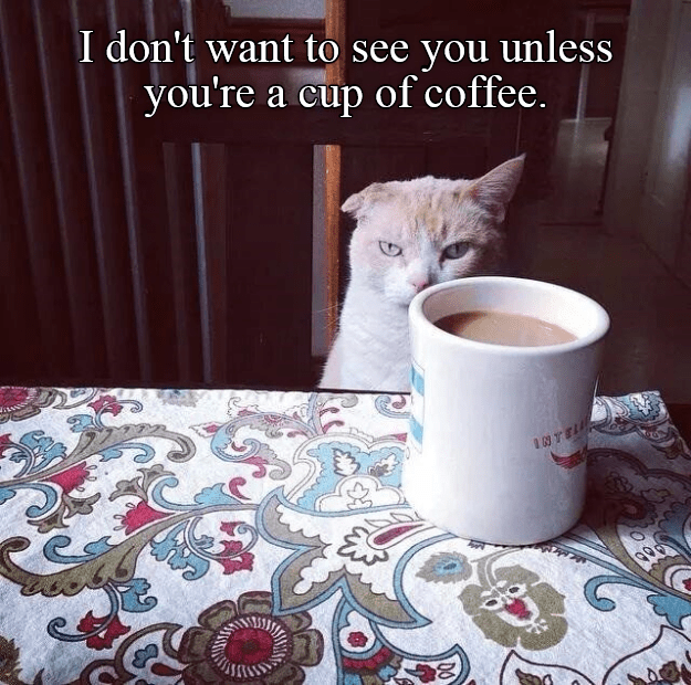 you cat want see coffee cup dont - 8985274112