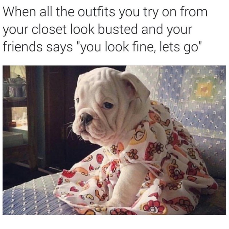 dogs,outfits,image