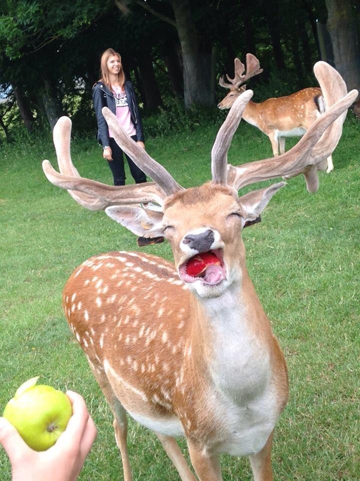 deer - 8985288704