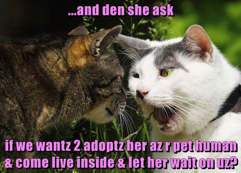 ...and den she ask if we wantz 2 adoptz her az r pet human & come live inside & let her wait on uz?