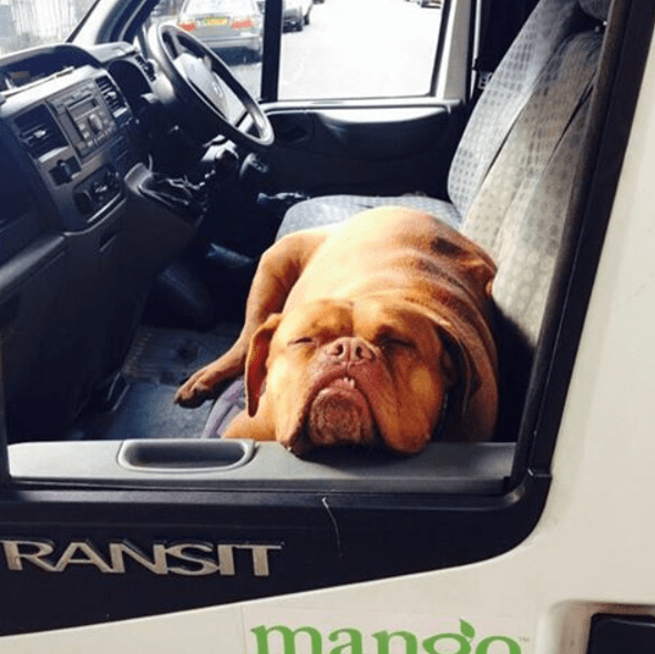 Dog - RANSIT mando