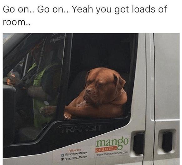 Dog - Go on.. Go on.. Yeah you got loads of room.. oinb RANSIT mango Follow me aeferyRonyMango Foxy Rory Mango couriers www.mangocouriers.com