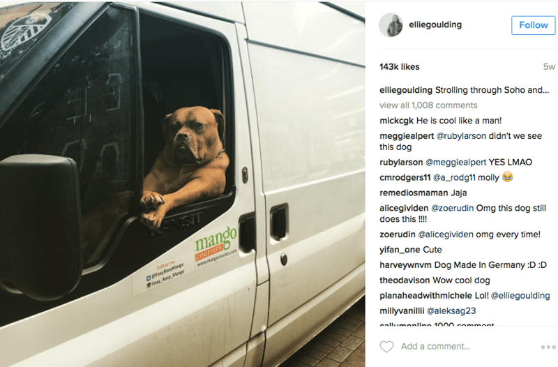 Vehicle door - elliegoulding Follow 143k likes 5w elliegoulding Strolling through Soho and... view all 1,008 comments mickcgk He is cool like a man! meggiealpert @rubylarson didn't we see this dog rubylarson @meggiealpert YES LMAO cmrodgers11@a_rodg11 molly remediosmaman Jaja alicegividen @zoerudin Omg this dog still KENSIT does this !! mango zoerudin @alicegividen omg every time! Couriers yifan_one Cute geloxyyonge ory Ray Mngo Foloe me www.mangeees.co harveywnvm Dog Made In Germany :D :D theod