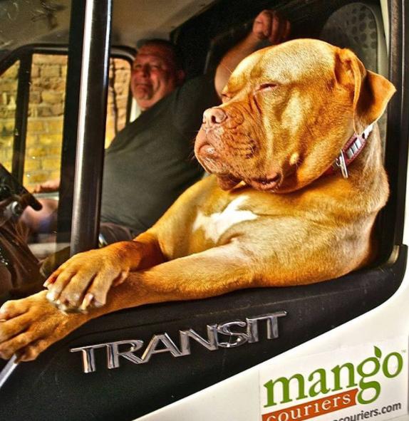Dog - TRANSIT mango Cnuriers Ouriers.com