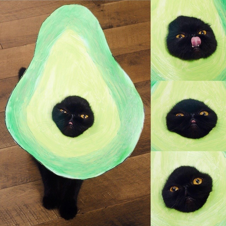 its an avocato