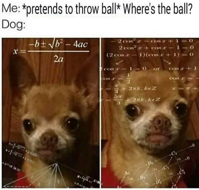 dogs meme math - 8985456384
